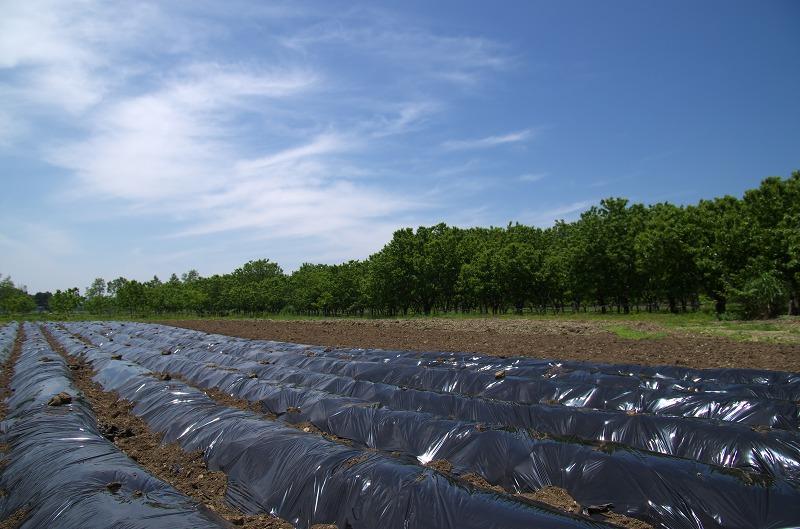 ピックランドマキノ 畑 農園
