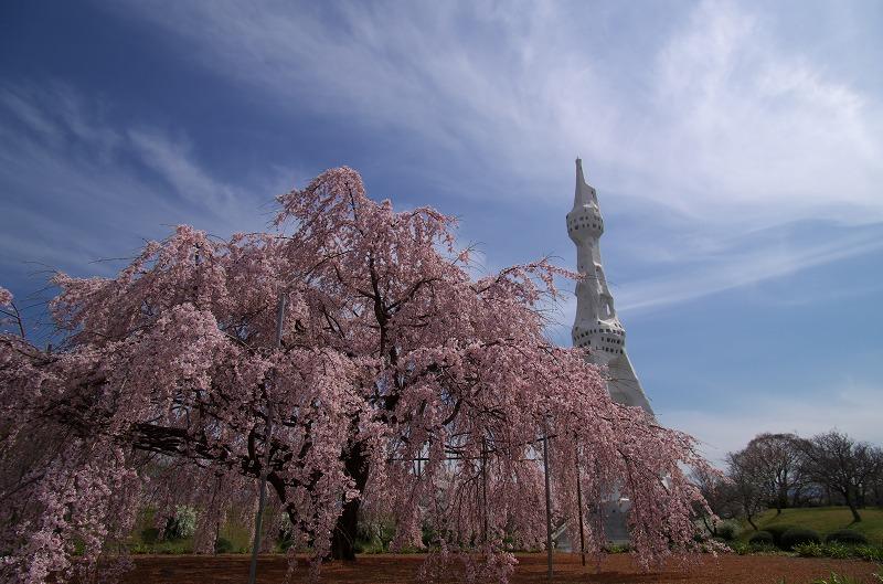PL大平和祈念塔の枝垂れ桜