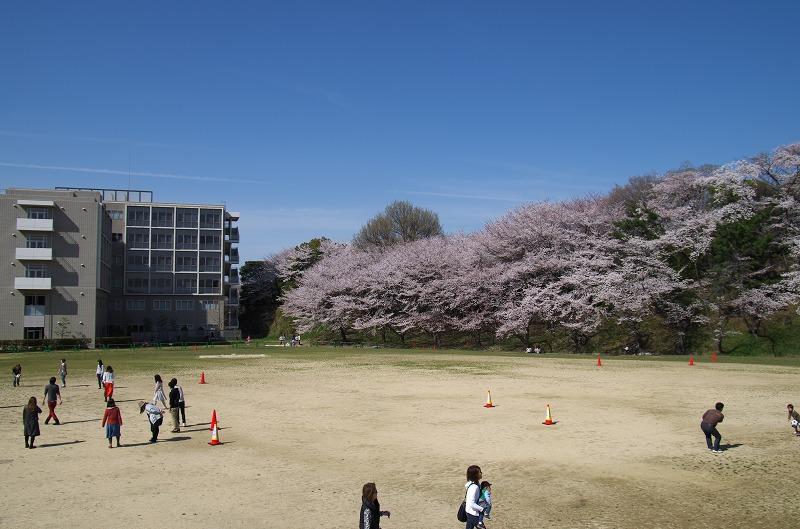 IBU桜WEEKS2014~四天王寺大学