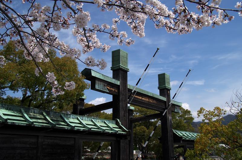 天理教 鳥居 桜