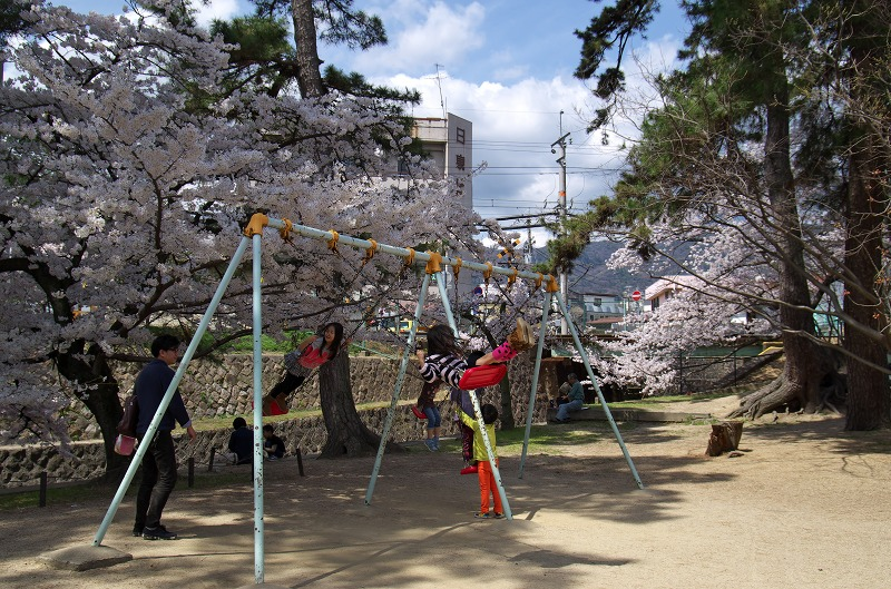 兵庫県西宮市 夙川の桜