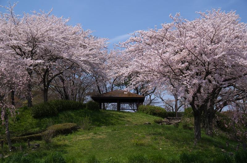 養老サービスエリア(下り)の桜