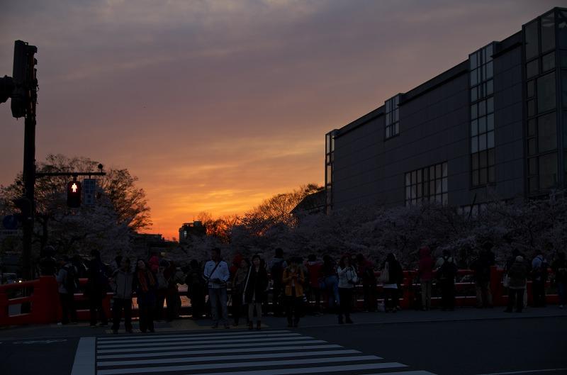 岡崎疏水・桜回廊ライトアップ