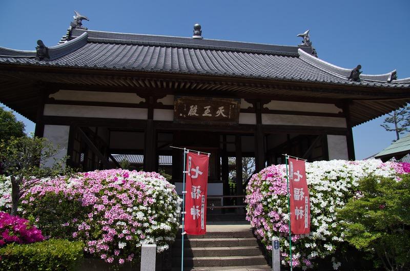 法雲禅寺 つつじ 堺市