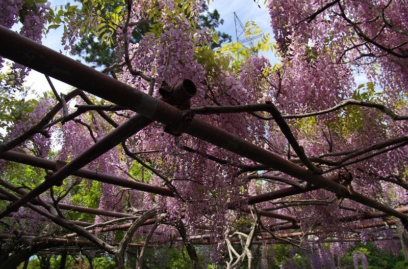 子安地蔵寺の藤と境内の花