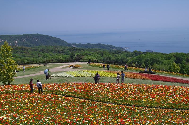 5月 あわじ花さじき ポピー畑