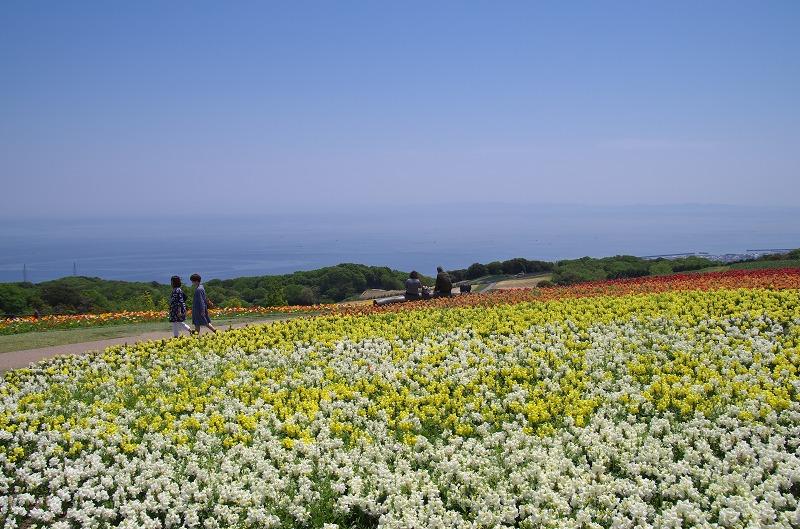 5月 あわじ花さじき 花壇