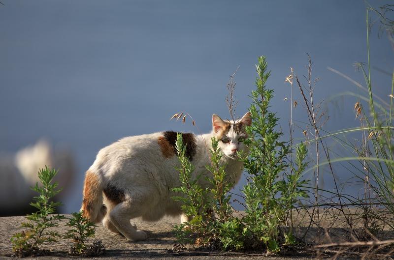 富島漁港 猫