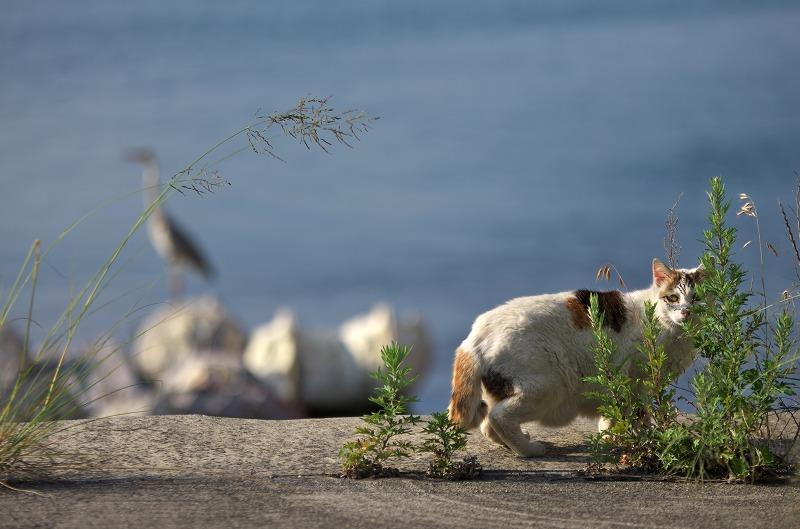 富島漁港 猫とサギ