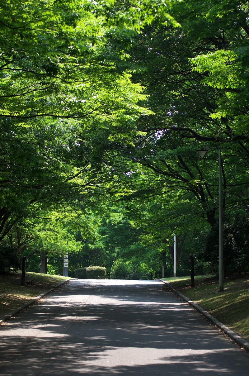 大泉緑地 初夏 7月