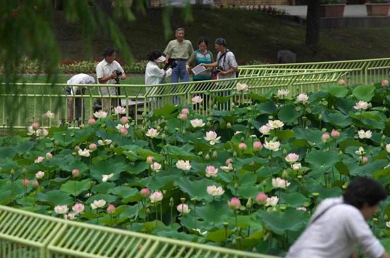 大阪市立 長居植物園 蓮・ハス