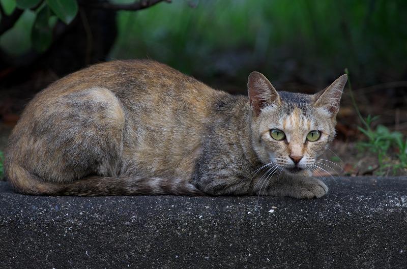堺泉北臨海工業地帯 猫