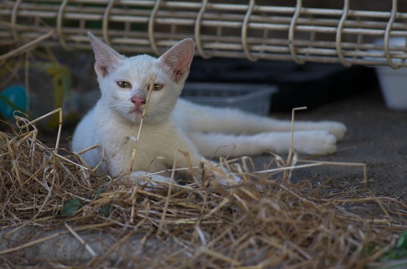 旧堺燈台 猫 ネコ