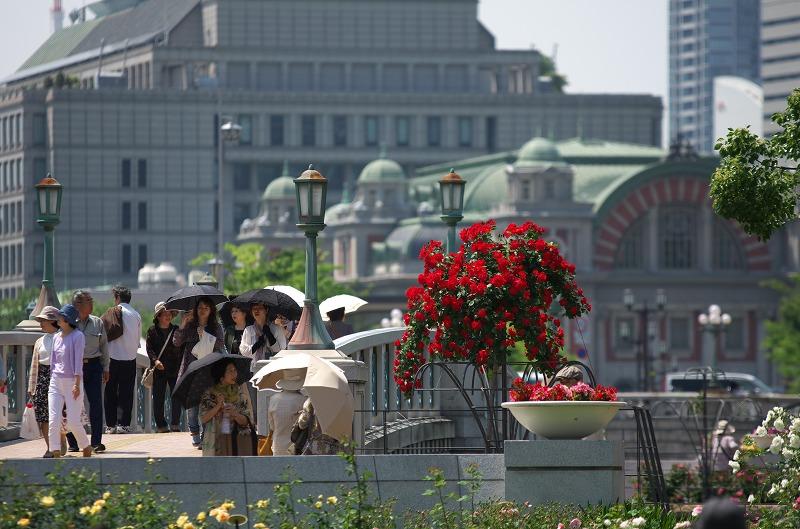 中之島バラ園 春バラ2014