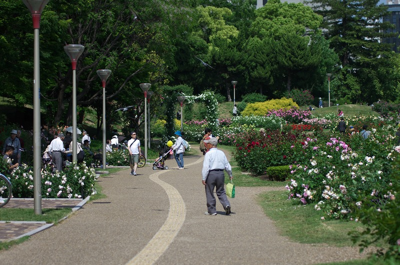 靭公園バラ園の春バラ2014