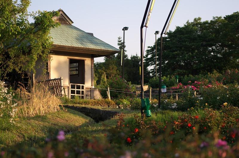 浜寺公園ばら庭園 2014