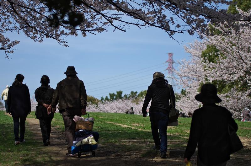 大泉公園 桜