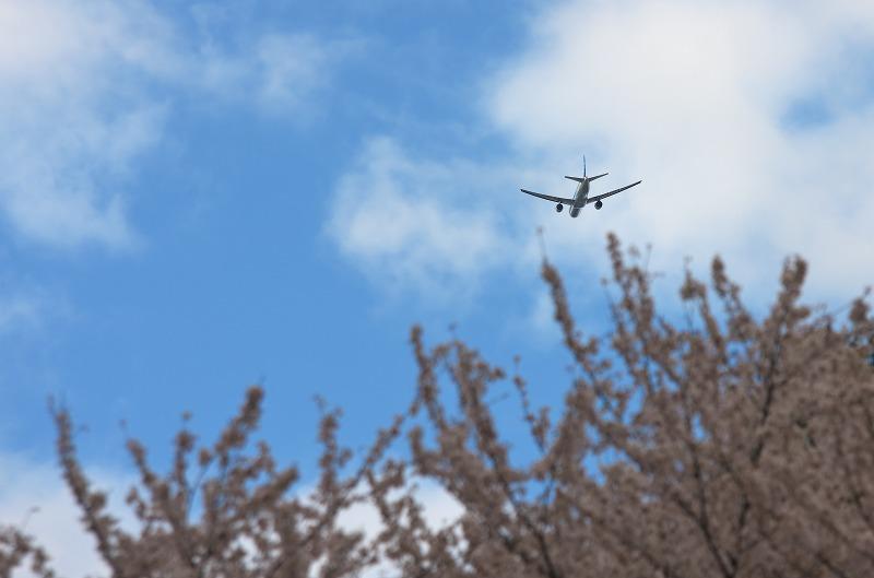 寺ヶ池公園の桜とユキヤナギ