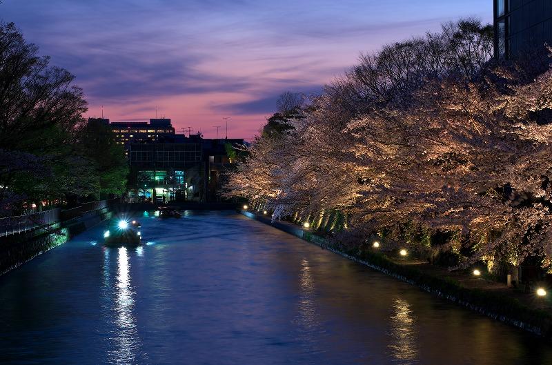 岡崎疎水・桜回廊ライトアップ