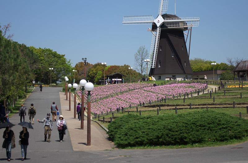鶴見緑地のチューリップと風車