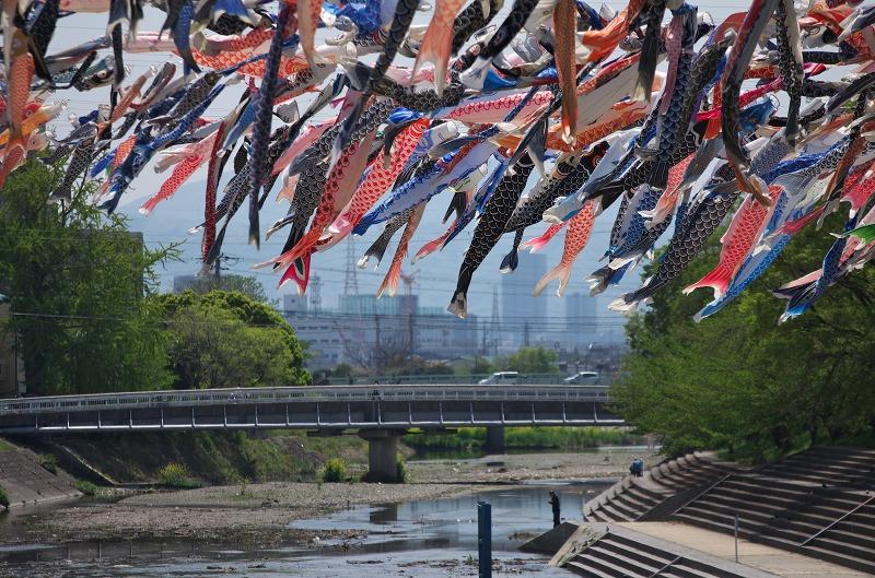 第23回 こいのぼりフェスタ1000 高槻市 芥川