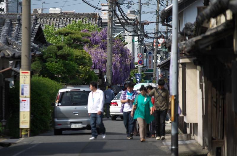 泉南・熊野街道 呉服屋 花