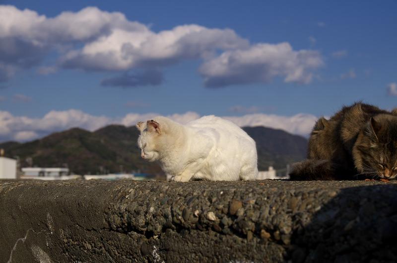 有田川河口の猫たち