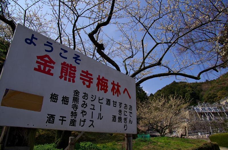 金熊寺梅林の梅まつり