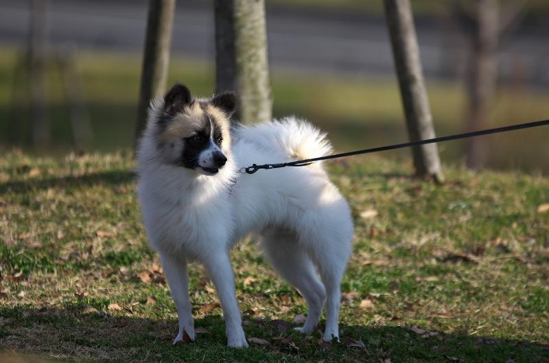 石川河川公園 駒ヶ谷地区 犬の散歩