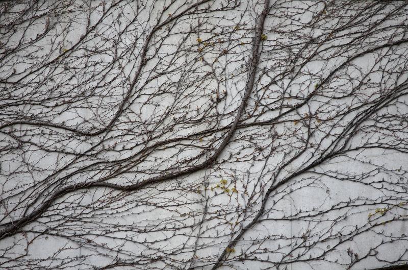 明石海峡公園 蔦