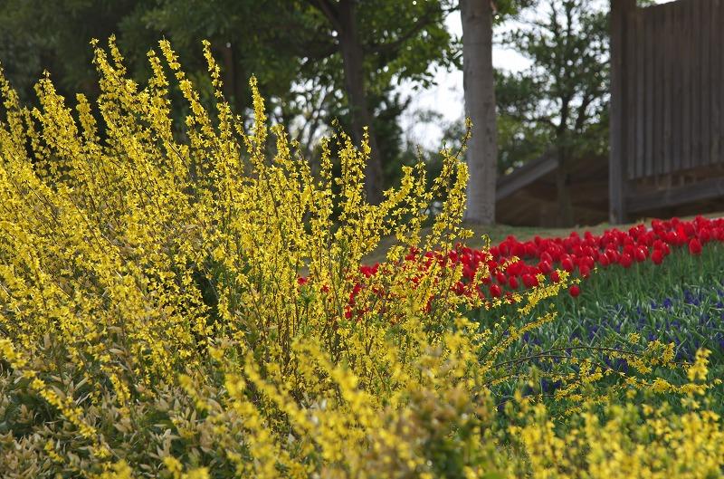 明石海峡公園 春の花