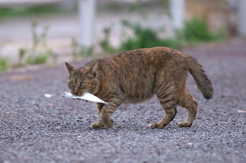 六甲アイランド 六甲大橋 夜景 猫