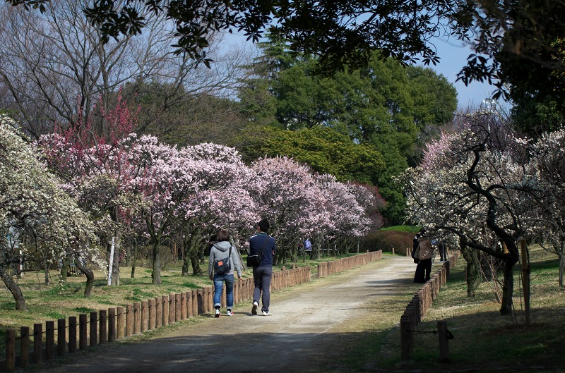 荒山公園 梅林 大阪府堺市