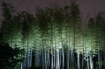 日本庭園 竹林