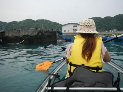 透明カヌーに乗ってイルカと遊ぼう2