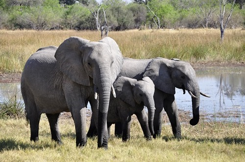 elephant-55255_640