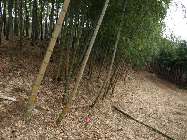 hoyasawa7 (11)