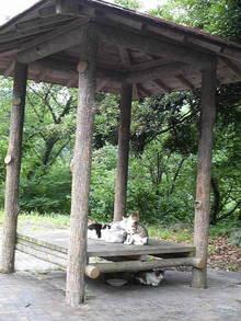 九州おやぢ の HAPPY LIFE-2009072612580000.jpg