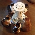 ストーブに集まるネコ5匹