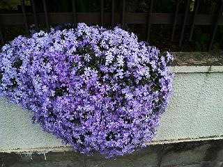 140416紫
