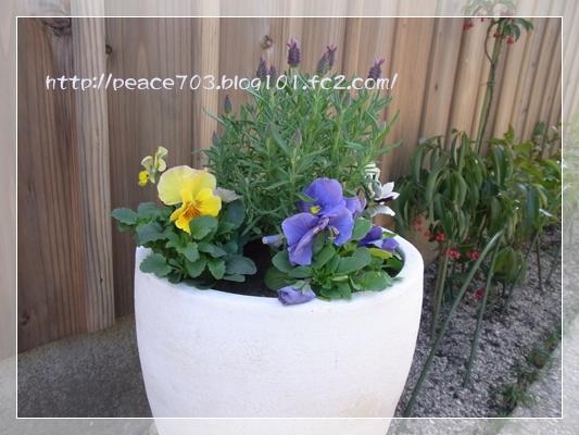 庭作り3R0010687