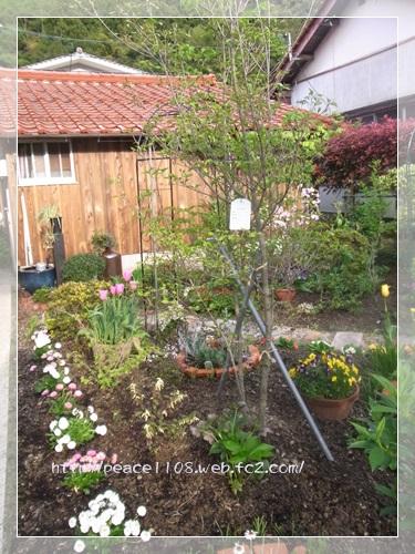 庭の花2001