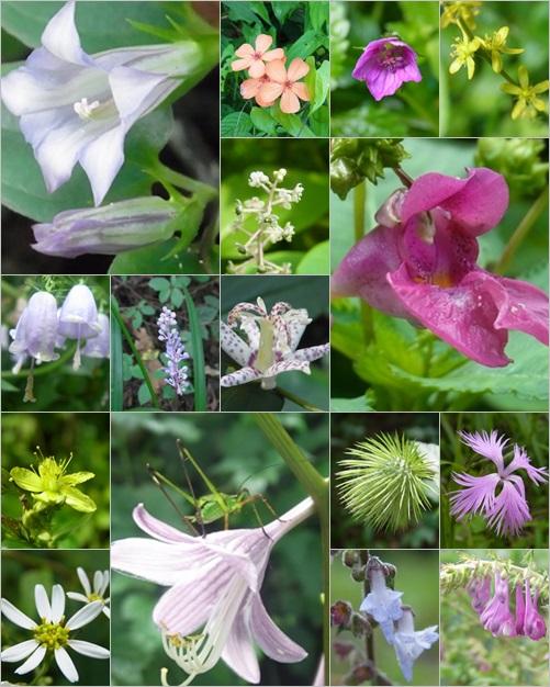 青野山の花