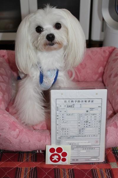 2014.06.28 狂犬病予防接種-2