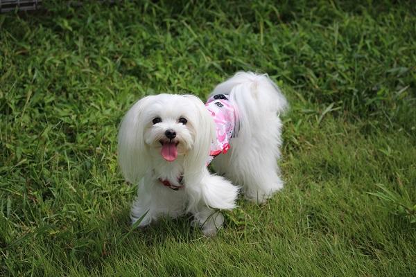 2014.09.19 京洛警察犬訓練所①-9