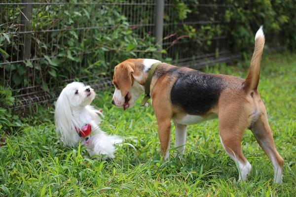 2014.09.19 京洛警察犬訓練所①-16