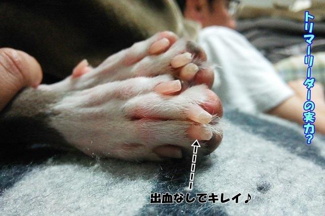 http://peesaurus.blog.fc2.com/
