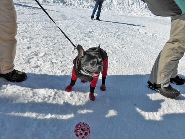 雪上運動会  (2)