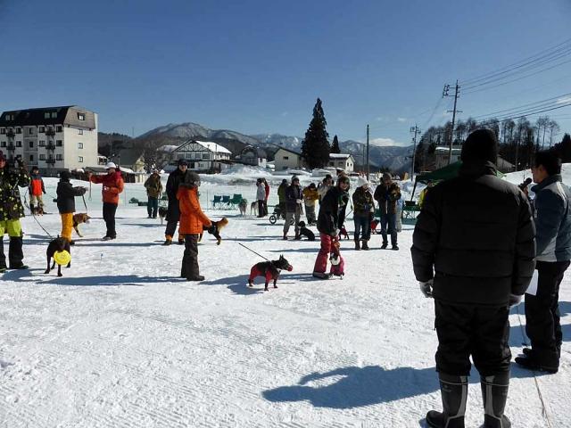 雪上運動会  (7)