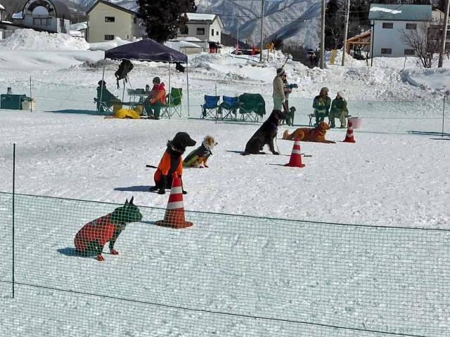 雪上運動会  (12)